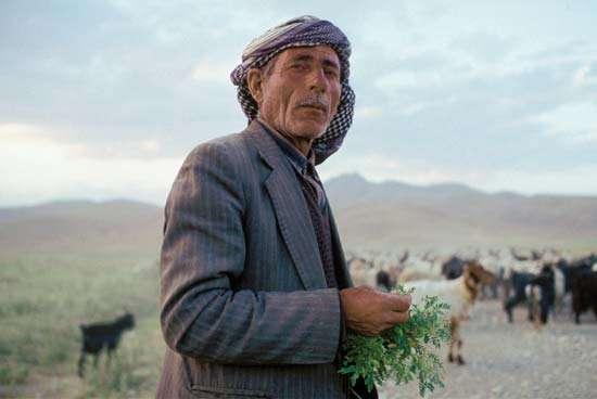 Yüksekova'da bir Kürt Çobanı ve Keçileri