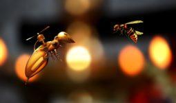 Arı Soyut Böcek Doğa Bal Sinek Kovan Robot