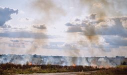 Yangın Alan Nadas