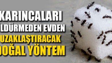 Karıncalar Nasıl Uzaklaştırılır ? Karınların Sevmediği Kokular Nelerdir ? 1