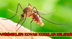 Sivrisinekler Neden Kaçar ? Sivrilerin Sevmediği Kokular Nelerdir ? 9