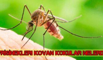 sivrisinek-kovan-koku-ve-bitkiler