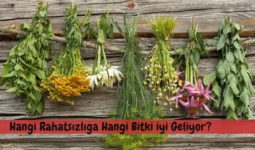 Hangi Rahatsızlığa Hangi Bitki İyi Geliyor? 1