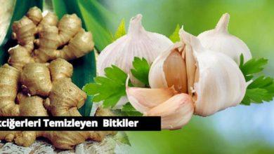 Akciğerleri Temizleyen Bitkiler Nelerdir? 1