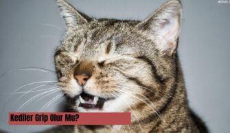 kediler-grip-olur-mu-kedilerde-grip-tedavisi