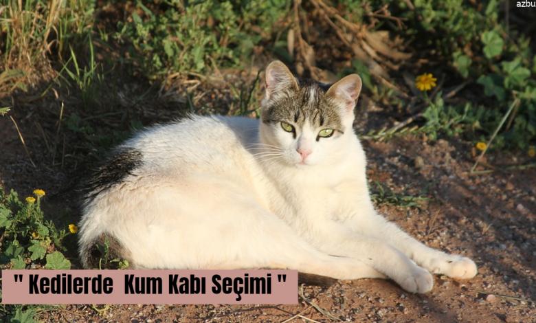 Kedilerde Kum Kabı Nasıl Seçilmelidir ? 1