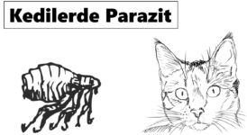 Kedilerde Parazit Neden Olur? Tedavisi Nasıl Yapılır? 6