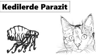 kedilerde-neden-parazit-olur-kedi-paraziti-tedavisi