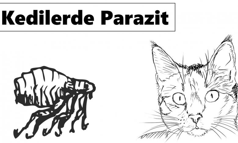 Kedilerde Parazit Neden Olur? Tedavisi Nasıl Yapılır? 1