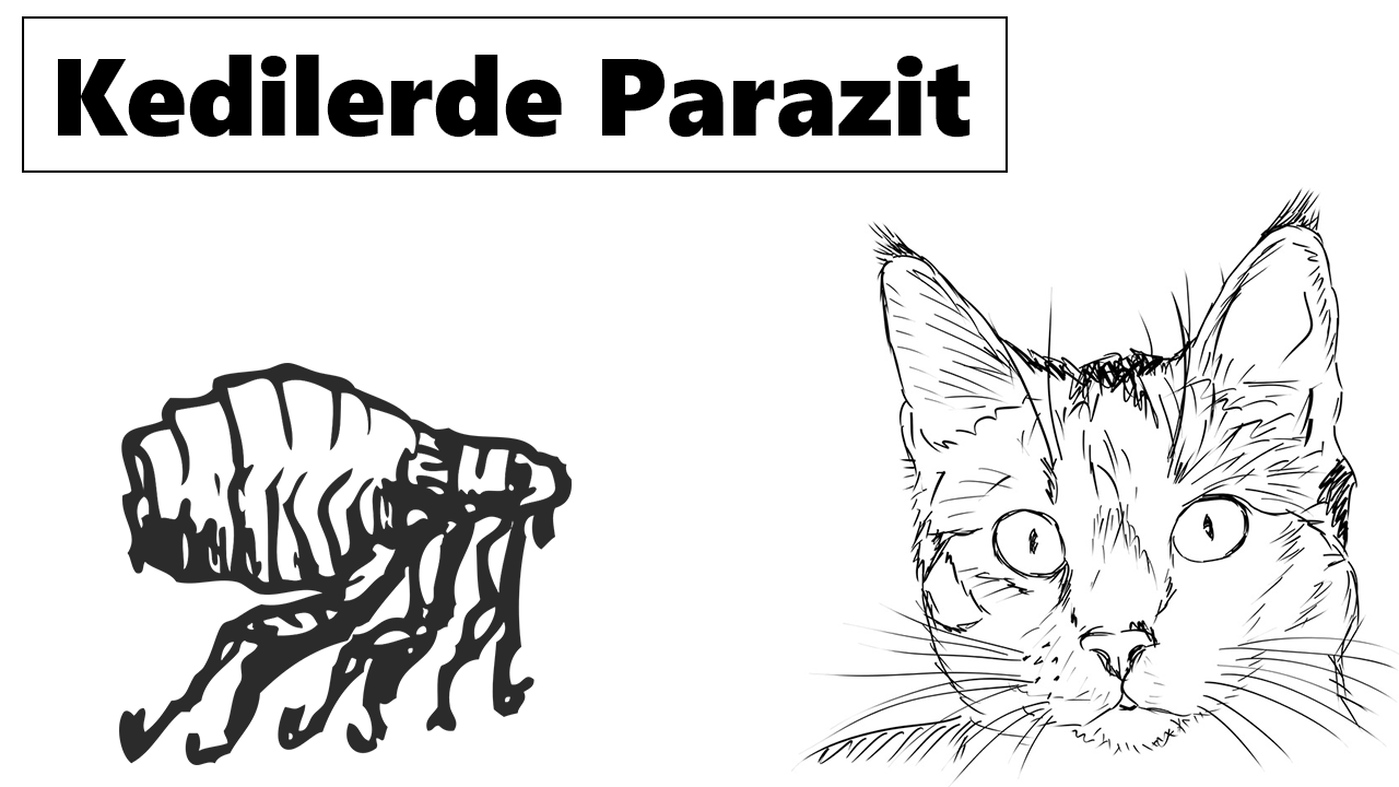 Kedilerde Parazit Neden Olur? Tedavisi Nasıl Yapılır? 3