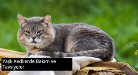 Yaşlı Kedilerde Bakım ve Tavsiyeler 6