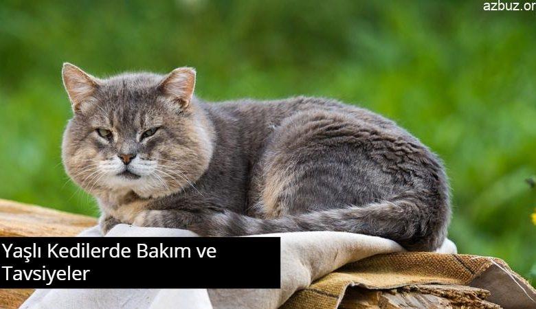Yaşlı Kedilerde Bakım ve Tavsiyeler 1