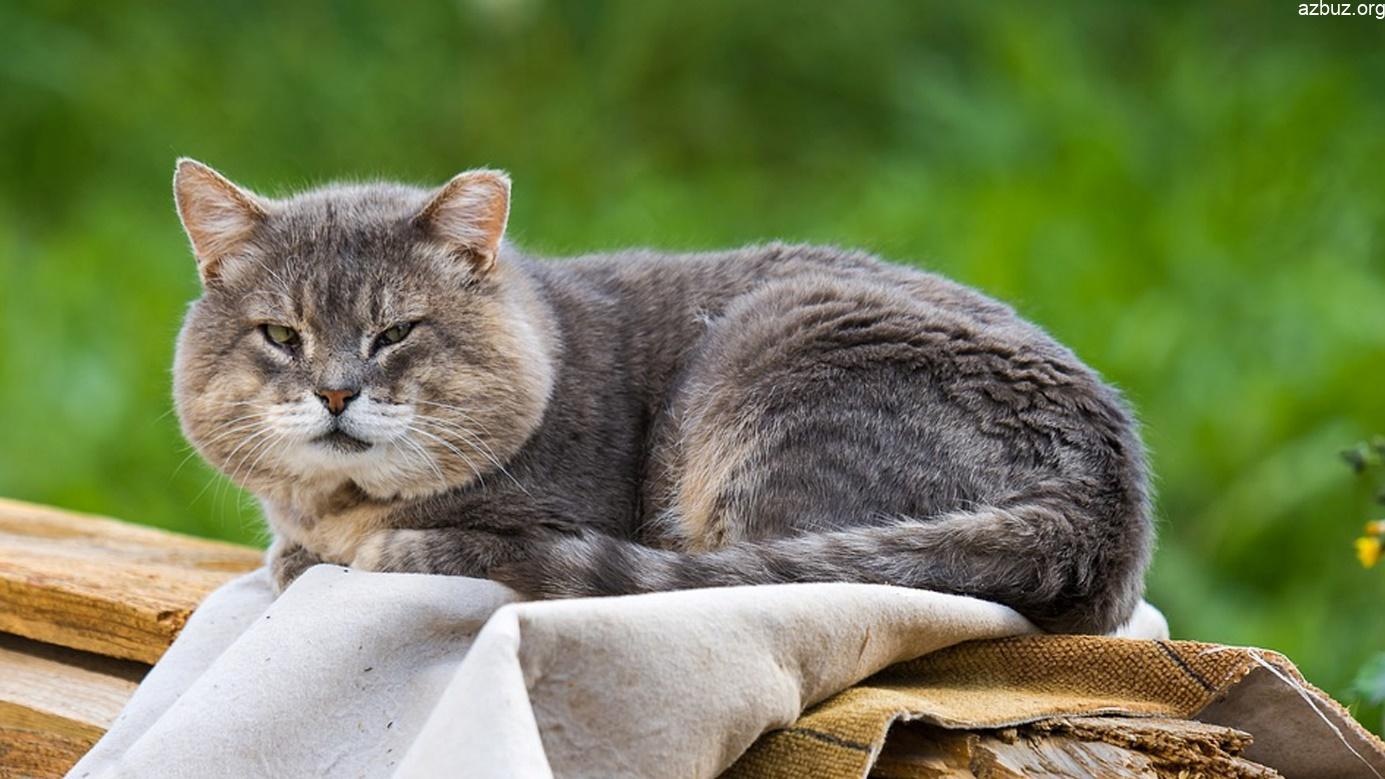 Yaşlı Kedilerde Bakım ve Tavsiyeler 2